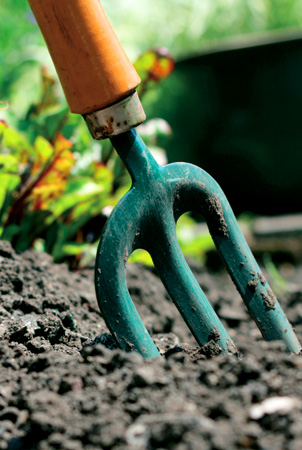 gardening tips, gardening advice, grow your own, grow vegetables,