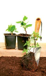 container garden, expert advice, gardening tips,