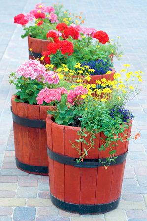 planting and digging, expert advice,
