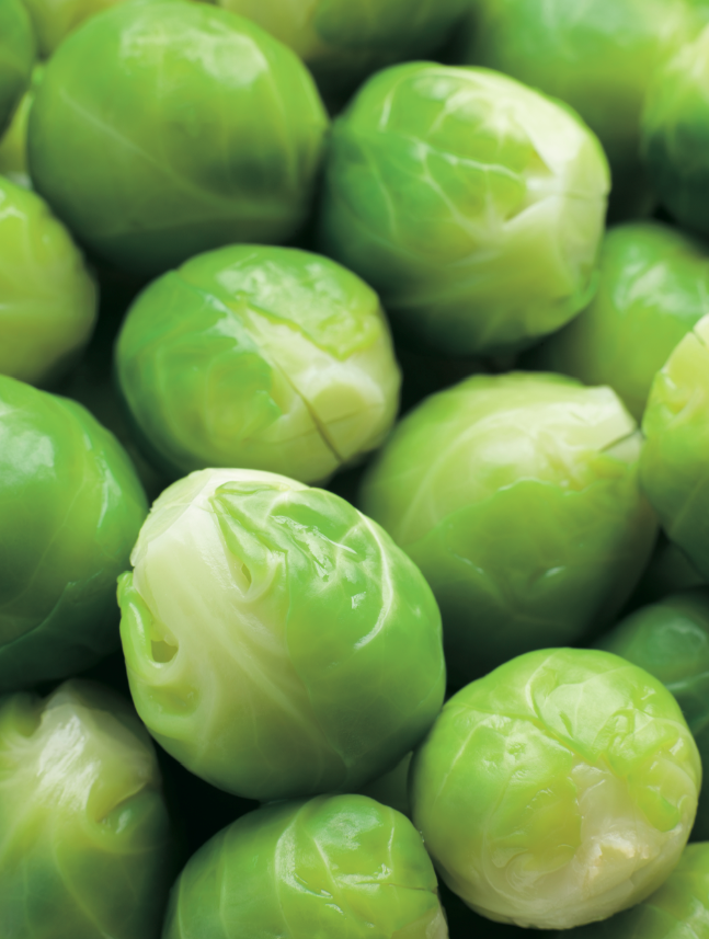 Crops in Pots, brussel sprouts