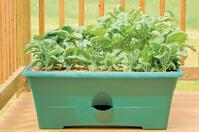 Crops in Pots Plastic 2