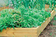 Crops in Pots Raised Bed