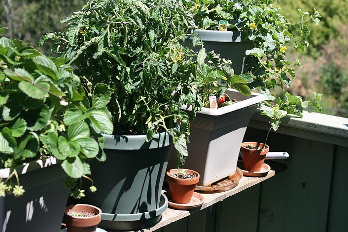 Crops_in_Pots_Fruit_Veg_Garden.jpg