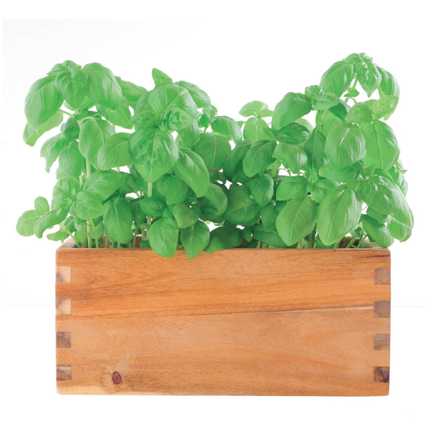 Crops in Pots Window Box Wood