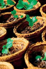 Crops in Pots Biodegradable Coir