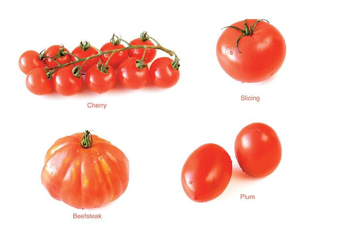 Crops_in_pots_tomato_types.jpg