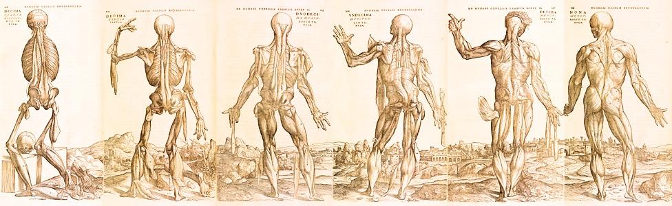 anatomywide-1.jpg