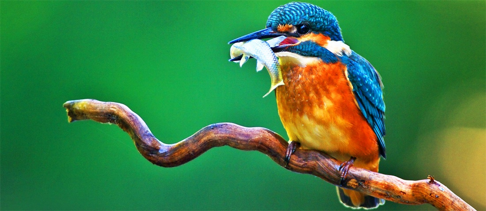 birdswide.jpg