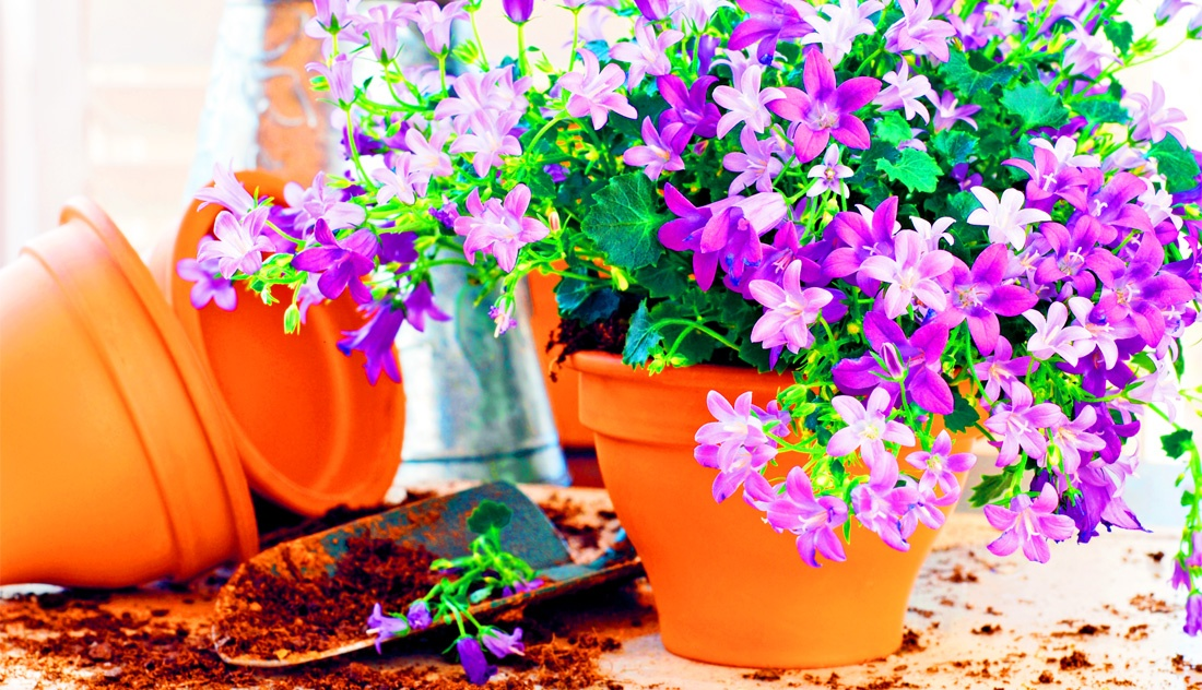 gardeningwide1-1.jpg