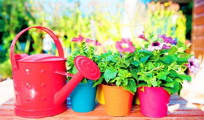 gardeningwide3.jpg