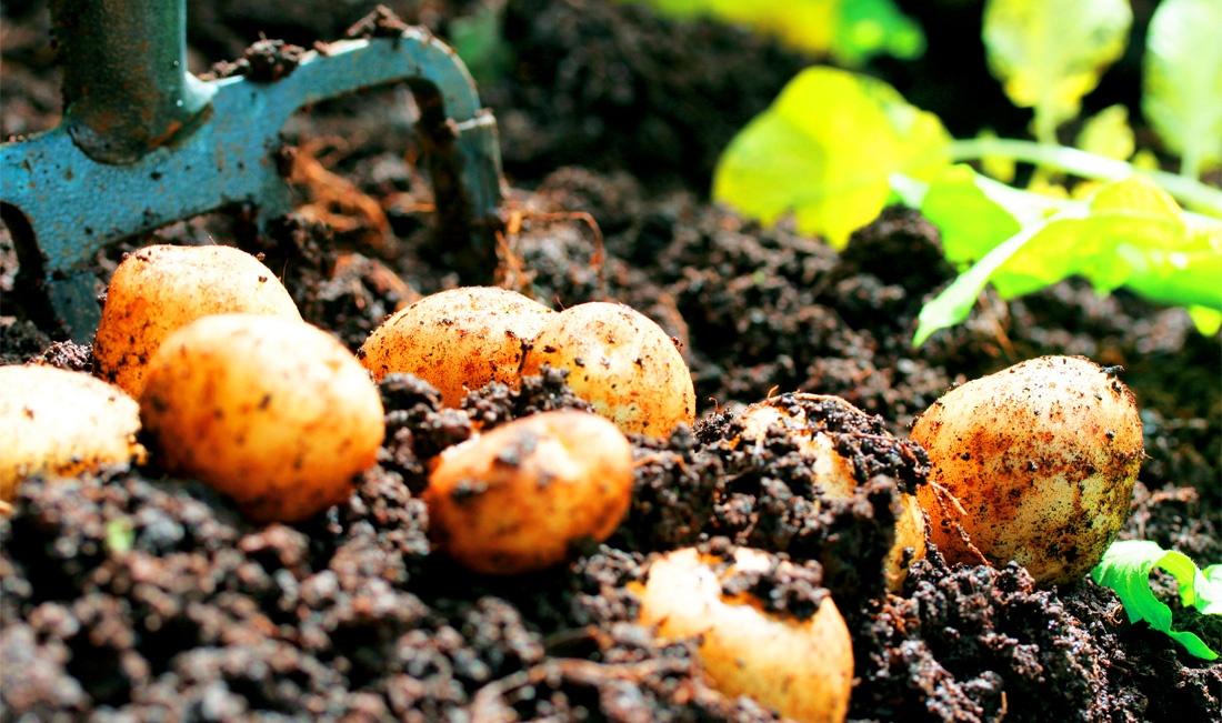 growyourownwide2.jpg